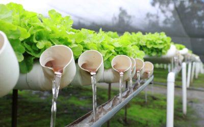 El Cultivo Hidropónico y la importancia de la calidad del agua